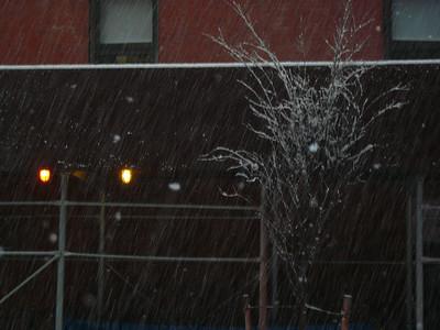 Snow NYC 2-11-2010